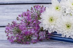 White and purple flowers close up. royalty free stock image