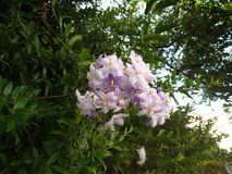 White and purple flowers with green leaves. royalty free stock images