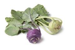 White and purple kohlrabi Stock Photos