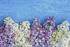 White and purple lilac lies on a blue table royalty free stock images