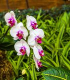 White and Purple Orchids stock photos