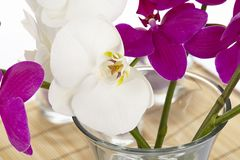 White and purple orchids - close up Stock Image