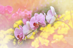 White and purple orchids. Stock Images