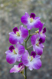 White and purple orchids. Flowers in gardens ,beautiful trees Royalty Free Stock Image