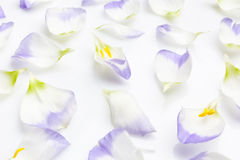 White and purple petals on white from side Royalty Free Stock Images
