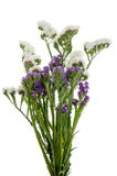 White  and purple statice flowers Royalty Free Stock Photos