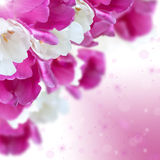 White and purple tulips flowers with beautiful bokeh, square ima Royalty Free Stock Photography