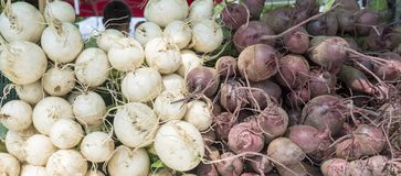 White and purple turnips for sale at the local market stock images