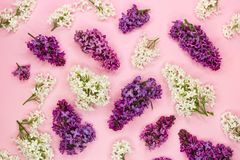 White, purple and violet lilac flowers on light pink background. Flat lay. Top view royalty free stock photo