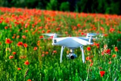 White quadrocopter, is flying high in the air, to take photos and record footage from above, in red poppy field. Drone with four motors, propellers, camera stock photos