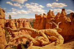 White Quirky Root in Bryce Canyon Park. White Quirky Root in Bryce Canyon National Park Stock Photo
