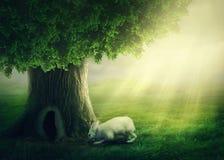 Free White Rabbit Stock Photos - 105682323
