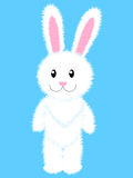 White rabbit Stock Images