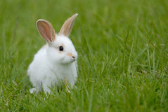 White rabbit. On the grass stock image
