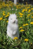 White rabbit. On the flowers Royalty Free Stock Image