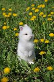 White rabbit. On the flowers Stock Photography