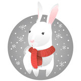 White rabbit Stock Photography