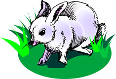 White rabbit. Illustration, vector for a white rabbit with grass background Royalty Free Stock Image