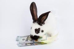 Free White Rabbit Royalty Free Stock Photo - 68255335