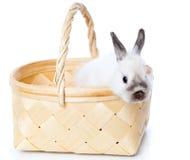 White rabbit in basket Royalty Free Stock Photos
