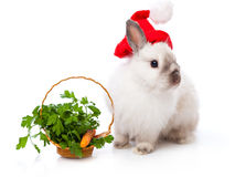 White rabbit and basket with parsley and carrot Royalty Free Stock Photos