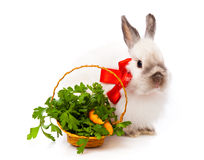 White rabbit and basket with parsley and carrot Stock Photography