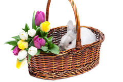 White rabbit in a basket Royalty Free Stock Images