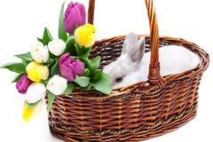 White rabbit in a basket Stock Images