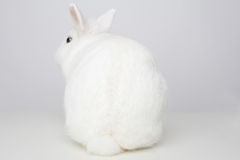 White rabbit from behind Royalty Free Stock Photography