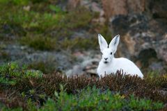 White Rabbit on Brown and Green Grass Field during Daytime Stock Photo
