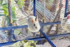 Rabbit in cage blue Royalty Free Stock Image