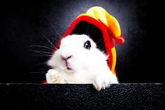 White rabbit with  cap on a black background Stock Image
