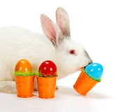 White rabbit carrying Easter eggs Stock Photo