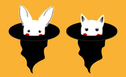 White Rabbit Cat in Witch Hat Royalty Free Stock Photos