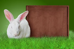 White rabbit and chocolate bar Royalty Free Stock Photos