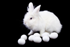 White rabbit and eggs on black Royalty Free Stock Photos