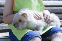 White rabbit and farm boy Royalty Free Stock Image