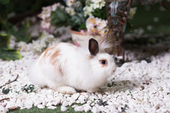White rabbit in garden, cute animal Stock Image