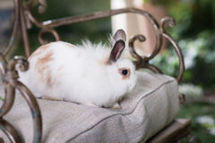 White rabbit in garden, cute animal Stock Photography