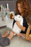White rabbit getting claws cut at veterinarian Stock Photo
