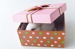 The white rabbit in gift box in easter concept. White rabbit in gift box in easter concept Stock Photo