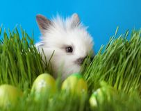 White rabbit is in the grass Stock Image