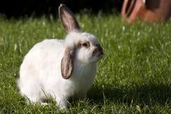 White rabbit on the grass Stock Photo