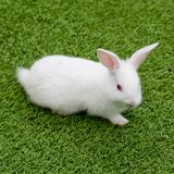 White rabbit in grass Royalty Free Stock Photography