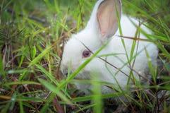 White rabbit on the grass Stock Image