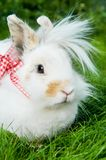 White rabbit on green grass Royalty Free Stock Photos