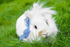 White rabbit on green grass Royalty Free Stock Photo