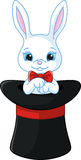 White rabbit in a hat Stock Image