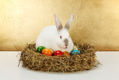 White rabbit in hay nest with colored eggs Royalty Free Stock Photography