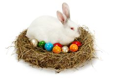 White rabbit in hay nest with colored eggs Stock Photography